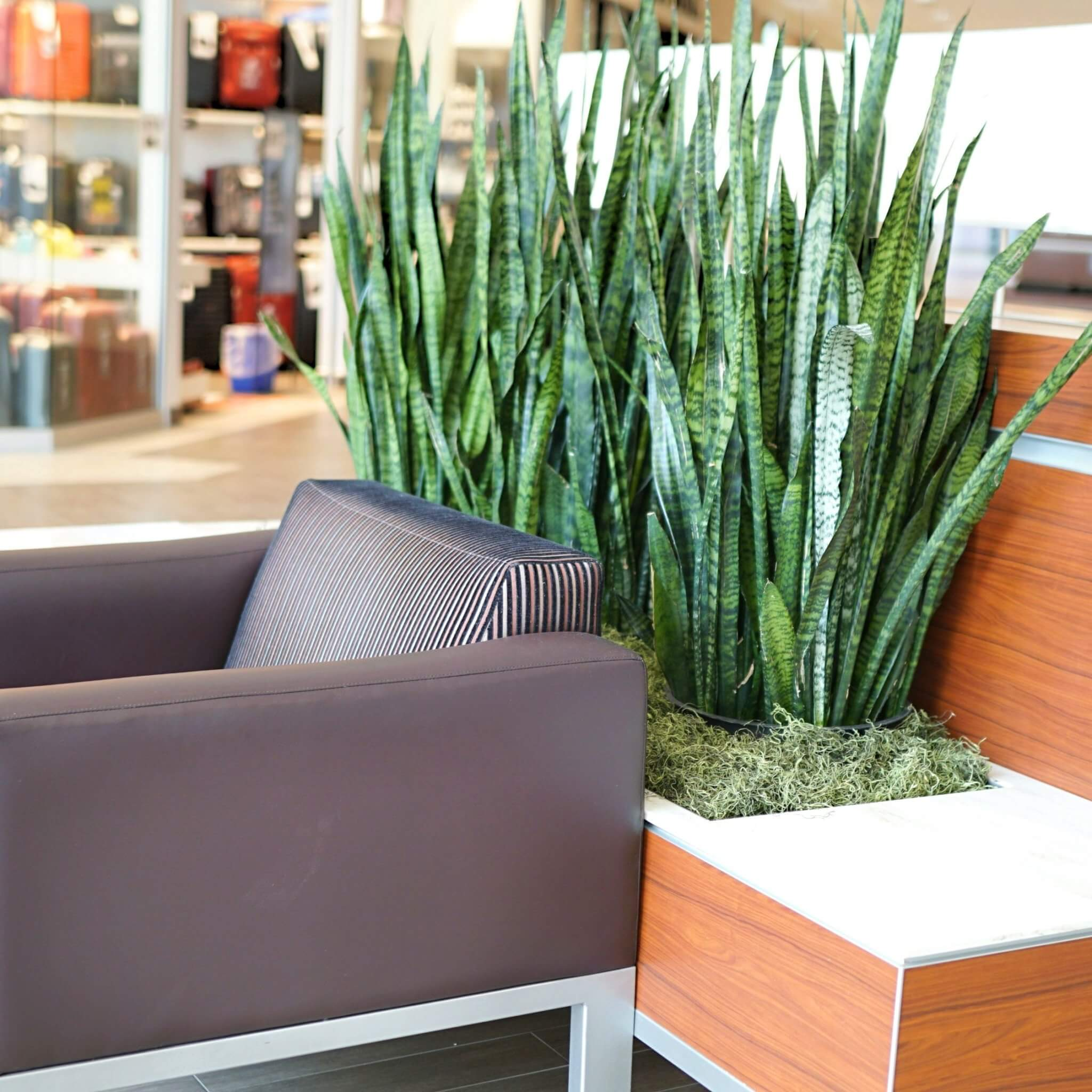 Planter box and chair